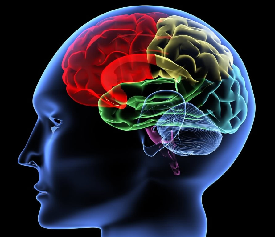 Música para equilibrar hemisferios del cerebro – Arte Ciencia y ...